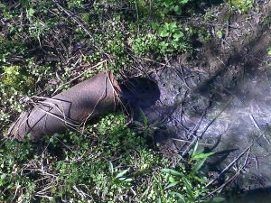 """The seller's septic guy said everything """"worked perfect"""". I always take the time to walk the property- back in the rough stuff was this discharge. It was hooked directly to the septic tank."""